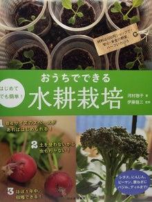 まりちゃんのベランダ水耕栽培