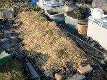 耕作放棄地を剣先スコップで畑に開拓!有機肥料を使い農薬無しで野菜を栽培する週2日の農作業記録 byウッチー-131001イチゴかおりん定植10