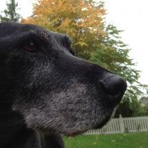 老犬だより58:紅葉…