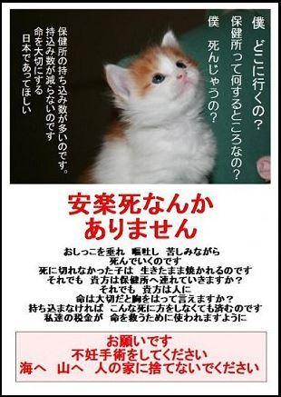 ★桃とあられのdiary★