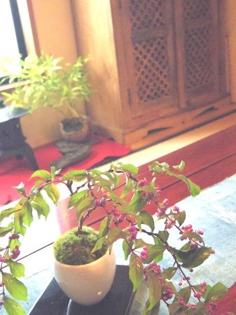 bonsai life      -盆栽のある暮らし- 東京の盆栽教室 琳葉(りんは)盆栽 RINHA BONSAI-コムラサキ ムラサキシキブ 琳葉盆栽