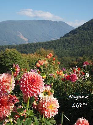 Nagano Life**-やま