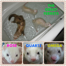 THE GREAT FERRETS
