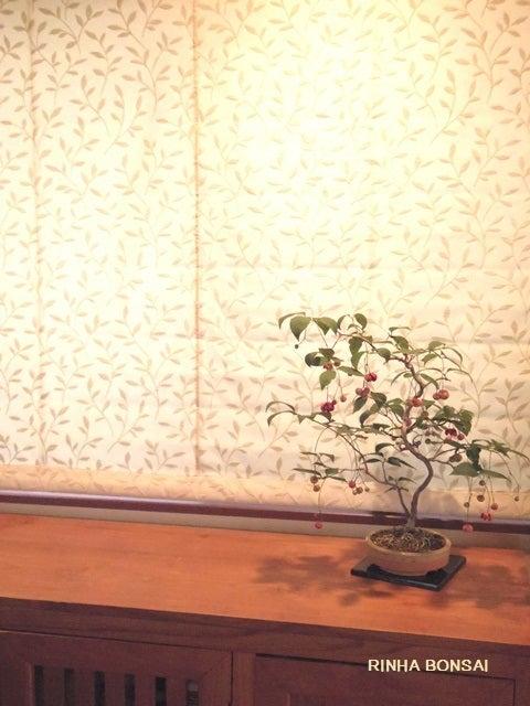 bonsai life      -盆栽のある暮らし- 東京の盆栽教室 琳葉(りんは)盆栽 RINHA BONSAI-琳葉盆栽 ツリバナ