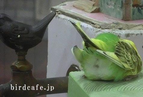 ようこそ!とりみカフェ!!~鳥カフェでの出来事や鳥写真~