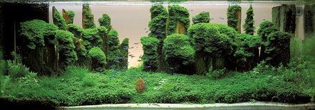 盆栽丼 BONSAI★DON 特盛り入りました~♪-世界水草レイアウトコンテストグランプリ