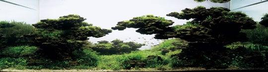 盆栽丼 BONSAI★DON 特盛り入りました~♪-世界水草レイアウトコンテストグランプリ作品