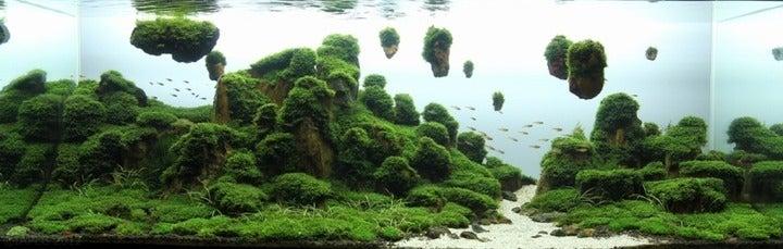盆栽丼 BONSAI★DON 特盛り入りました~♪-ラピュタ盆栽岩が浮いてる