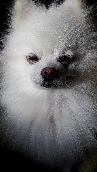 犬ばかブログ