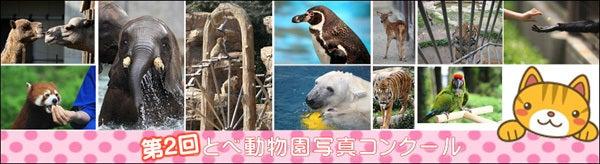 とべ動物園を応援する写真クラブのブログ