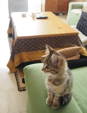 天正少年使節団イタリア随行ネコのブログ