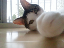 PFL★MIKIのブログ-2013101009380000.jpg