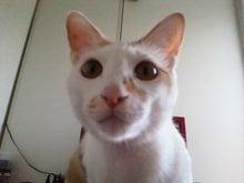 PFL★MIKIのブログ-2013101009340000.jpg