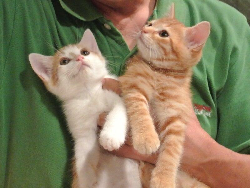 猫を欲しい人はいる ねりまねこ・地域猫