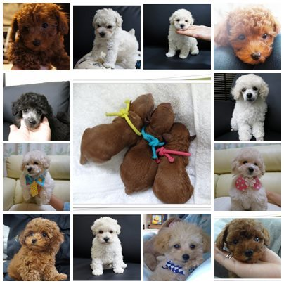 $☆fairyland☆  ~toypoodle a specialty kennel dog house~ 今日のひとこま♬