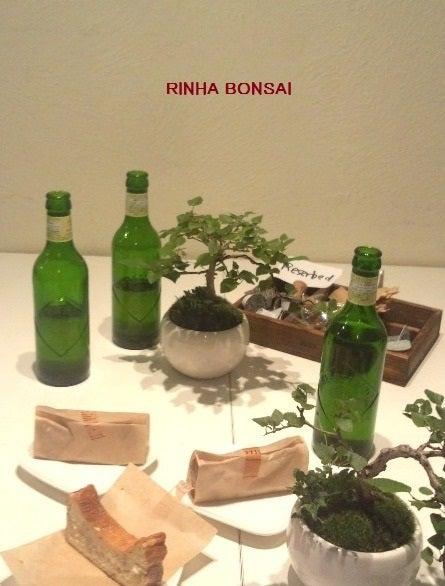 bonsai life      -盆栽のある暮らし- 東京の盆栽教室 琳葉(りんは)盆栽 RINHA BONSAI-琳葉盆栽教室 表参道