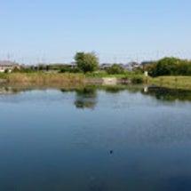 最近の釣果(池ですが…