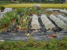 耕作放棄地を剣先スコップで畑に開拓!有機肥料を使い農薬無しで野菜を栽培する週2日の農作業記録 byウッチー-131015ウッチー式・今日の農作業の出来栄え02