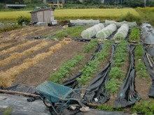 耕作放棄地を剣先スコップで畑に開拓!有機肥料を使い農薬無しで野菜を栽培する週2日の農作業記録 byウッチー-131015ウッチー式・今日の農作業の出来栄え05