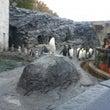 旭山動物園に行って来…