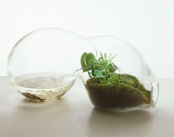 盆栽丼 BONSAI★DON 特盛り入りました~♪-ガラス盆栽テラリウム06