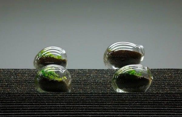 盆栽丼 BONSAI★DON 特盛り入りました~♪-ガラス盆栽テラリウム10