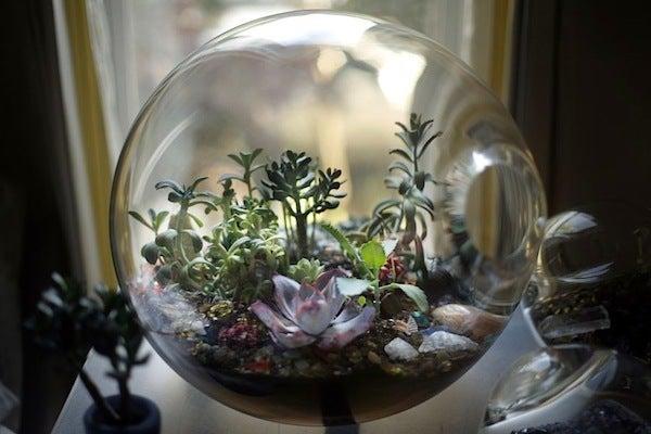 盆栽丼 BONSAI★DON 特盛り入りました~♪-ガラス盆栽テラリウム