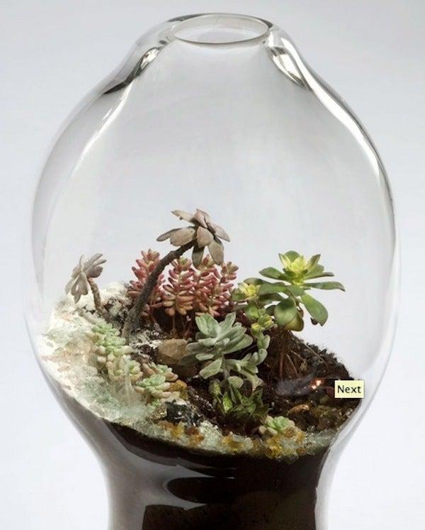 盆栽丼 BONSAI★DON 特盛り入りました~♪-ガラス盆栽テラリウムbig04