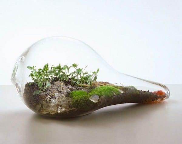 盆栽丼 BONSAI★DON 特盛り入りました~♪-ガラス盆栽テラリウム07