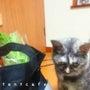 愛猫のお腹事情♪