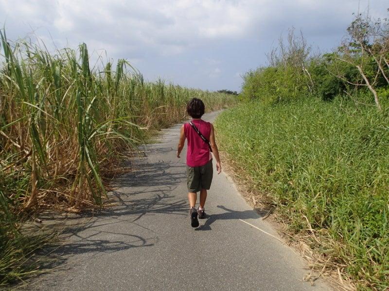 歩き人ふみの徒歩世界旅行 日本・台湾編-サトウキビの道