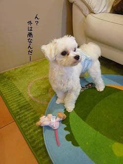 神奈川県相模原市にあるトリミングサロン「ドギーベリー」