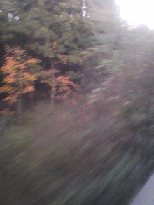 $メイブレラン潟さんのブログ-紅葉の渓谷