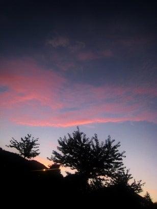 桜鳥文風のサリーガーデン