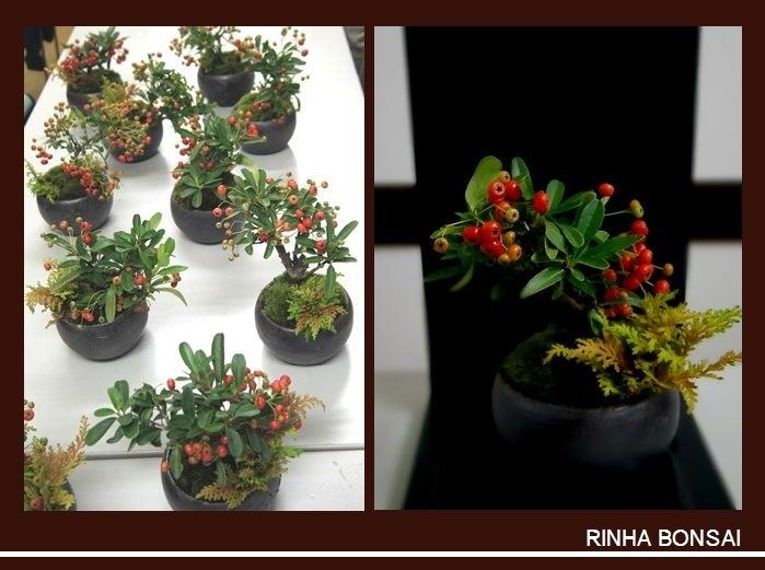 bonsai life      -盆栽のある暮らし- 東京の盆栽教室 琳葉(りんは)盆栽 RINHA BONSAI-琳葉盆栽 ピラカンサス