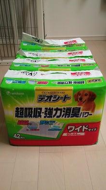 Happy Paws預かり日記-DSC_0503.JPG