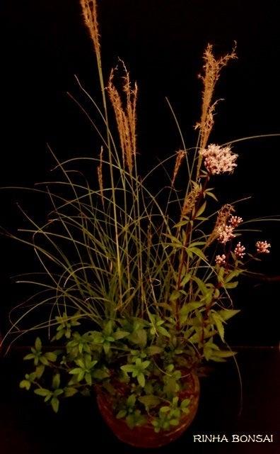 bonsai life      -盆栽のある暮らし- 東京の盆栽教室 琳葉(りんは)盆栽 RINHA BONSAI-琳葉盆栽 ヤクシマススキ