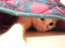 PFL★MIKIのブログ-2013102417450000.jpg