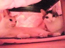 PFL★MIKIのブログ-2013102418000000.jpg