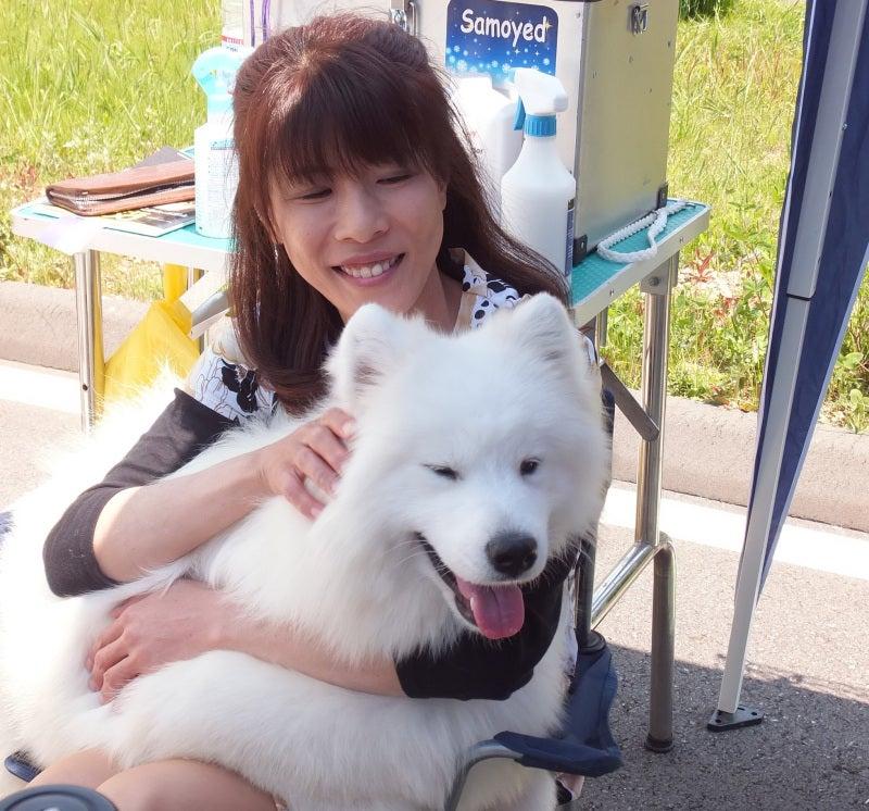 サモエド犬ソラと一緒に
