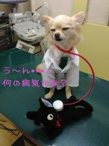 LUNAペットクリニック潮見 オフィシャルブログ-バニラ院長