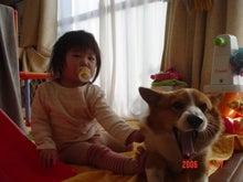 リウマチコーギー犬こーいちとmany friends