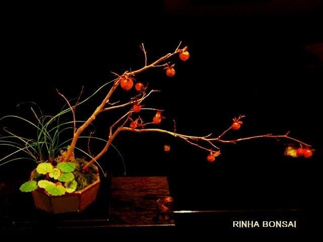 bonsai life      -盆栽のある暮らし- 東京の盆栽教室 琳葉(りんは)盆栽 RINHA BONSAI-老爺柿 ロウヤガキ 琳葉盆栽