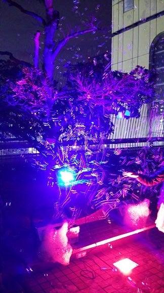 横浜ぶらり百景-ひかりの実3