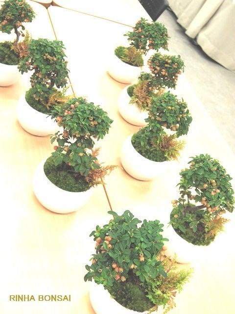 bonsai life      -盆栽のある暮らし- 東京の盆栽教室 琳葉(りんは)盆栽 RINHA BONSAI-琳葉盆栽 コケモモカマツカ