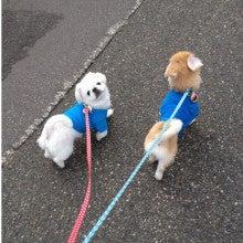 ぺきばにさん with スキニー-__.JPG