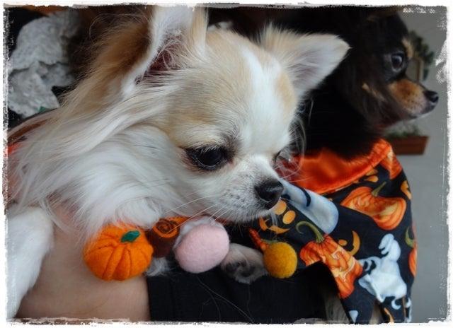 旅犬Lani&Leaのほほん風船記-ペロウィン
