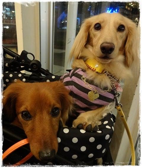 旅犬Lani&Leaのほほん風船記-LDB