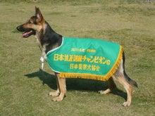 京洛警察犬訓練所