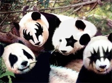 銀座Bar ZEPマスターの独り言-KISS Panda